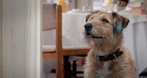 Говорящая собака Денис – Все могу (2015)