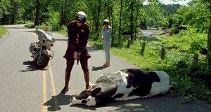 Мертвая корова – Я, снова я и Ирэн (2000)