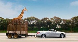 Жираф в прицепе машины – Мальчишник: Часть III (2013)