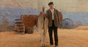 Спасение мальчика в заднице осла – Мафия Джейн Остин (1998)