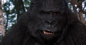 Встреча с гориллой – Эйс Вентура 2: Когда зовет природа (1995)