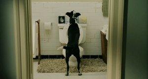 Собака в туалете – Брюс Всемогущий (2003)